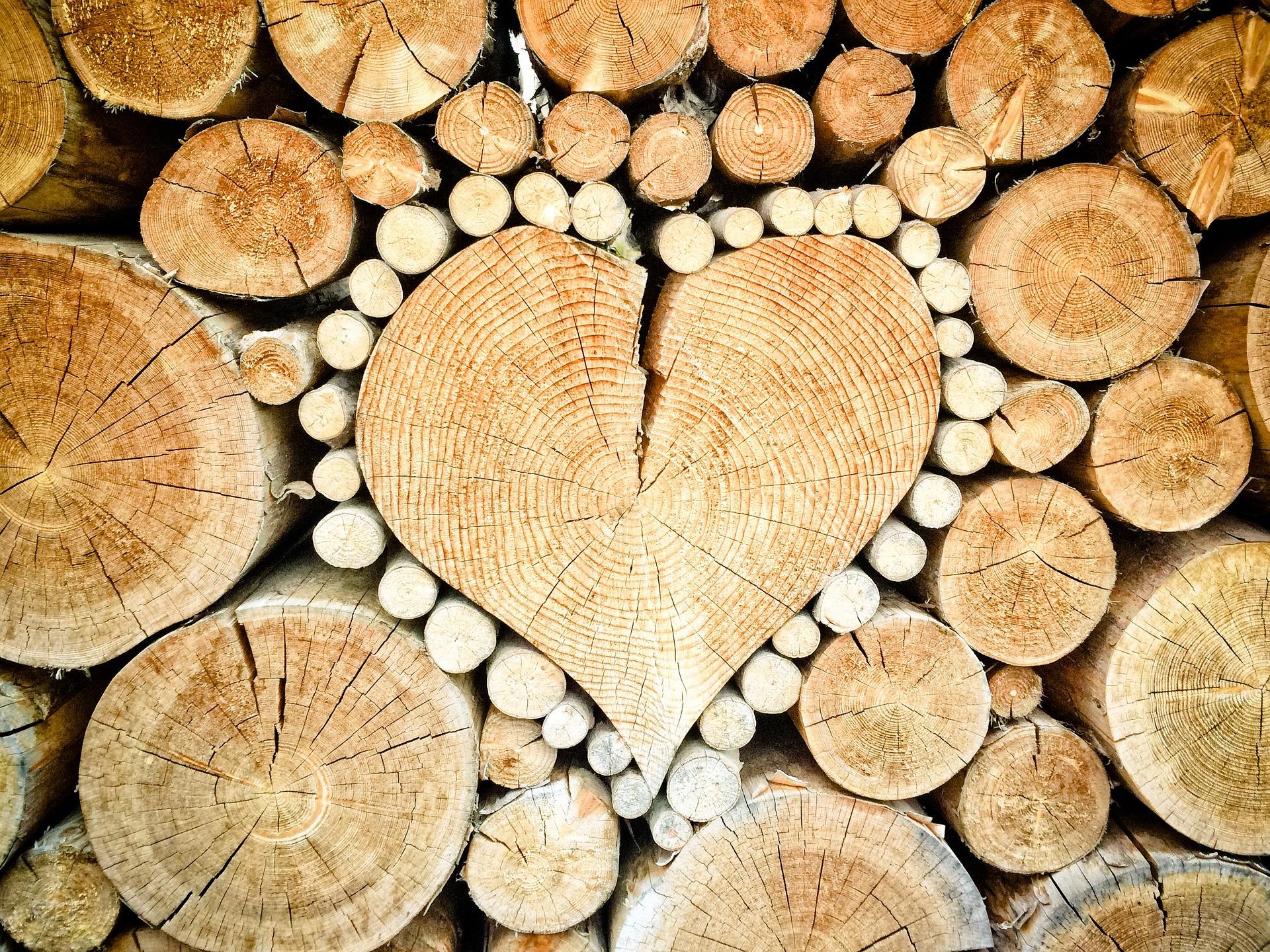 Miért tölt be fontos szerepet életünkben a fa?