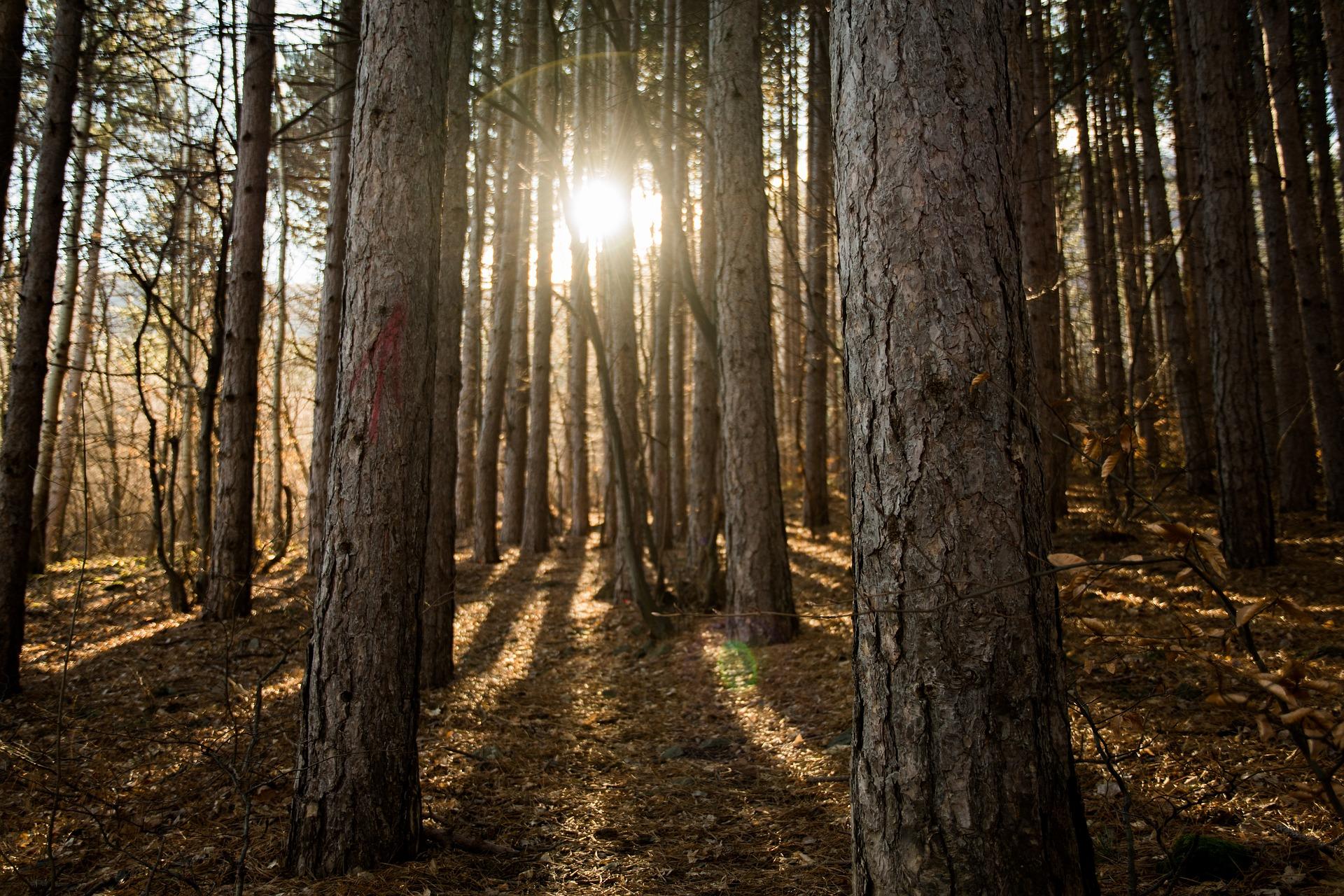Üdvözlet az erdőből!